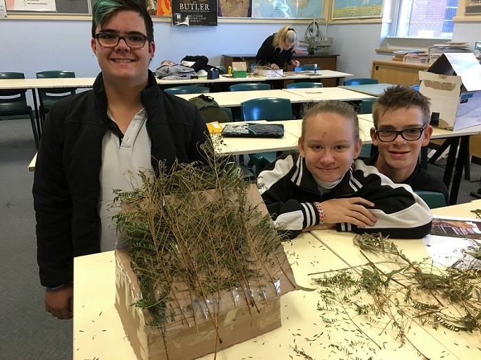 Group of students with tree branches on their desk